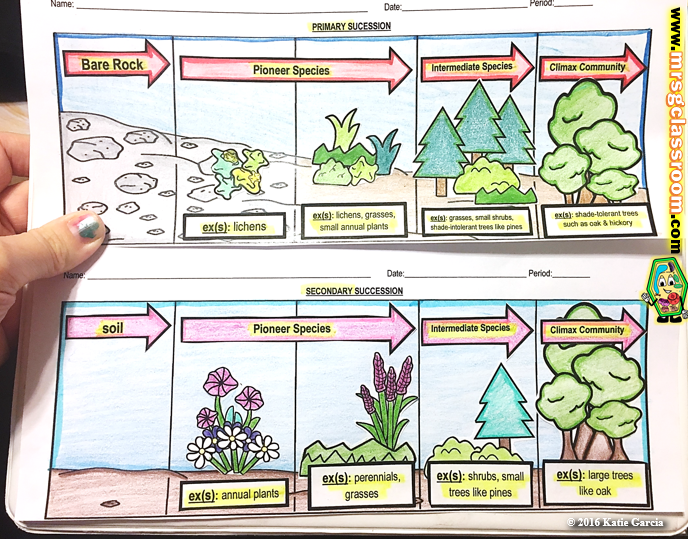 ecological succession 11 1 ecological succession primary & secondary