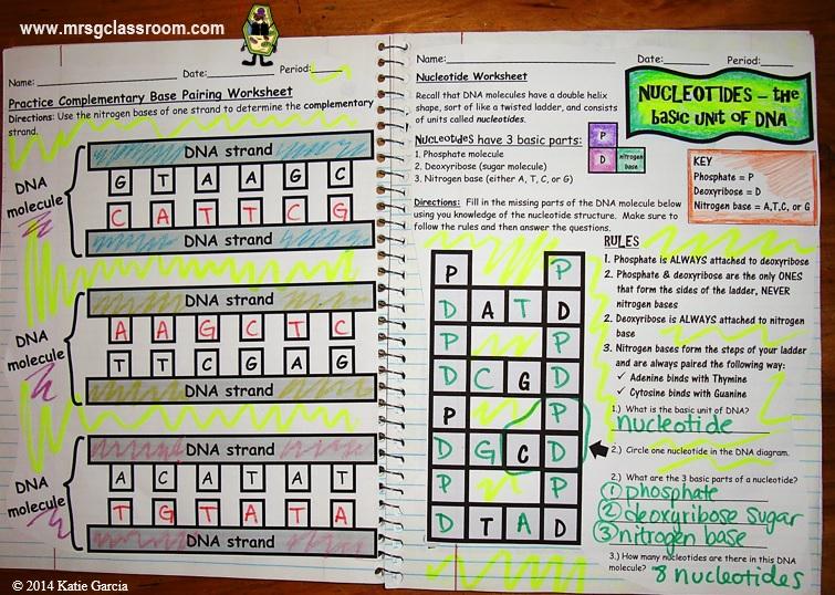 DNA Interactive Notebook - Mrs Gs Classroom
